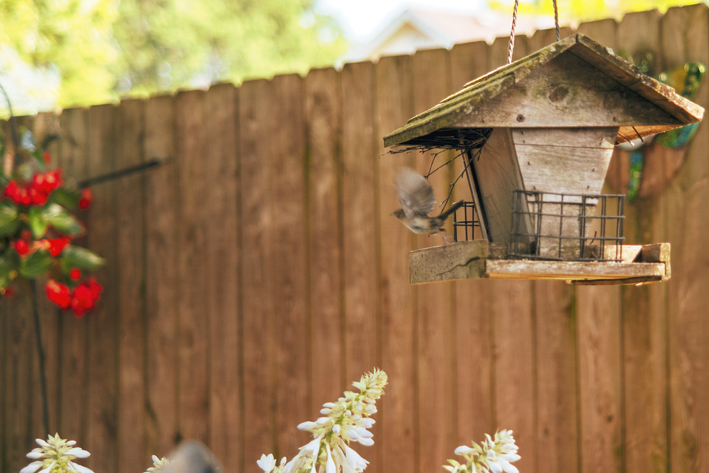 how to make a bird feeder out of wood